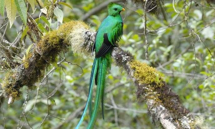 2-quetzal3